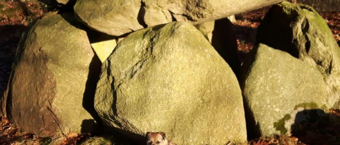 Dellbrück Dithmarschen Hünengrab Großsteingrab Megalithanlage